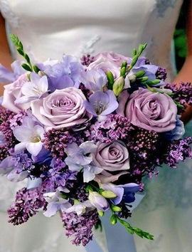 Gelin Çiçeği Lila Mor