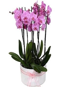 8 Dal Orkide Bahçesi (Kampanya)