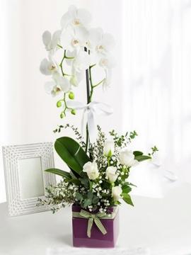 Orkide ve Beyaz Güller