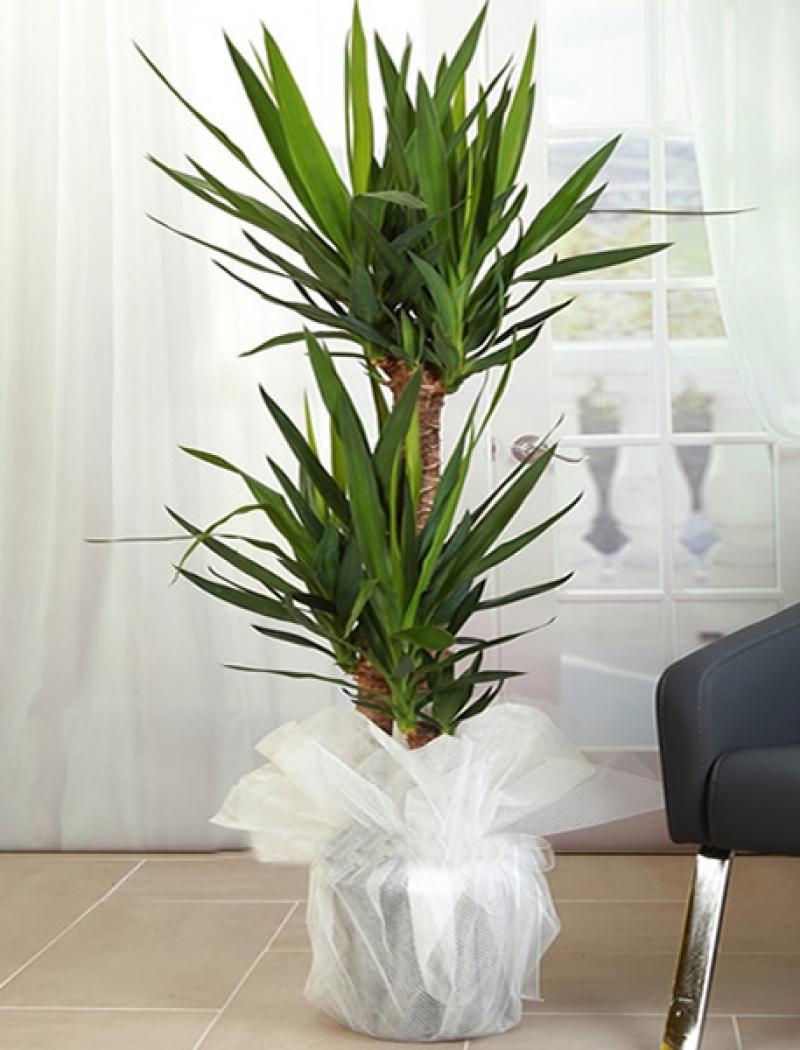 3lü Yuka Saksı Çiçeği