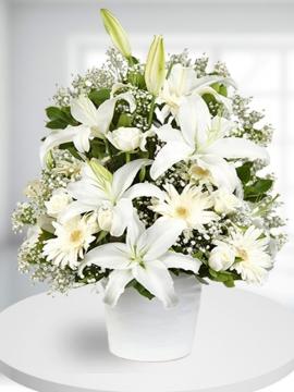 Beyaz Çiçek Tasarımı