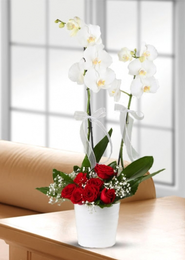 Orkide Kırmızı Gül Aranjmanı