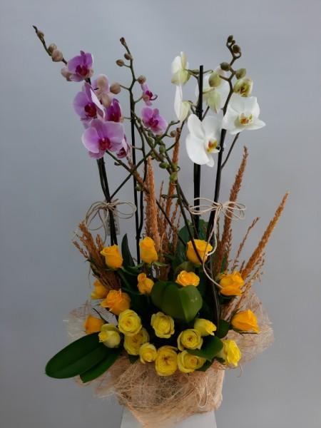 4 Dal Orkide ve Sarı Güller