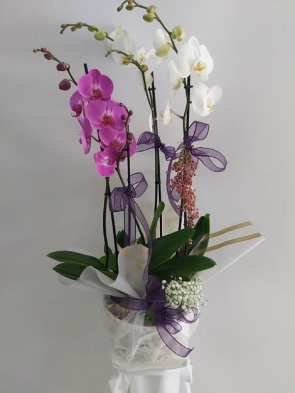 4 Dal Beyaz Lila Orkide