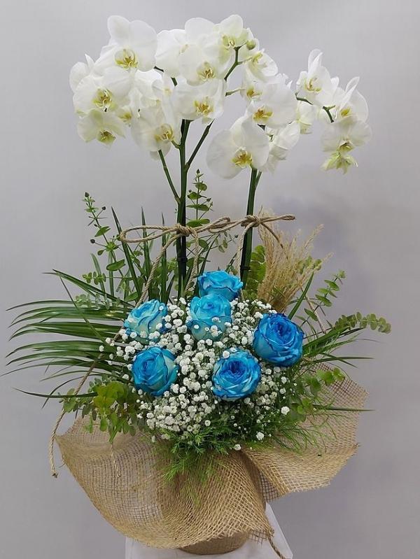Mavi Gül Orkide