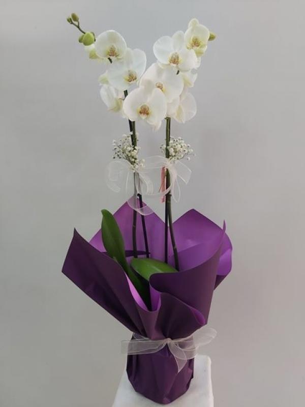2 Dal Beyaz Orkide Mor Ambalajlı