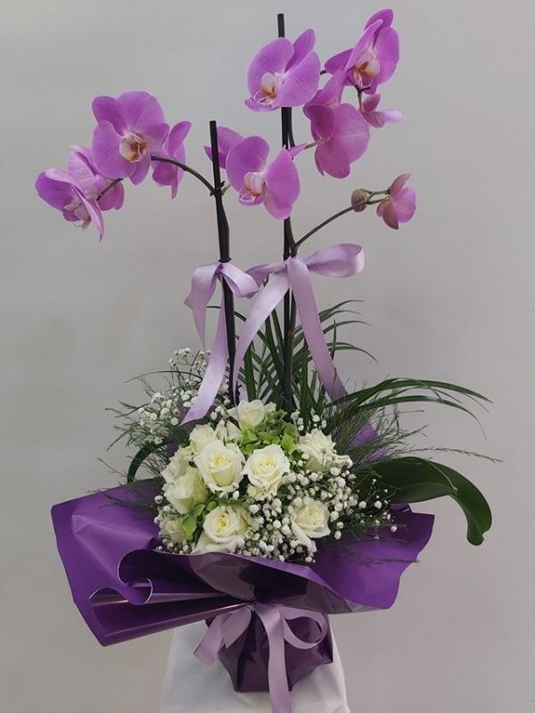 Lila Orkide Gül