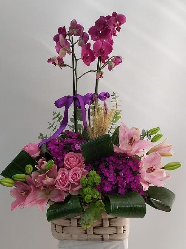 Orkide Çiçek Sepeti