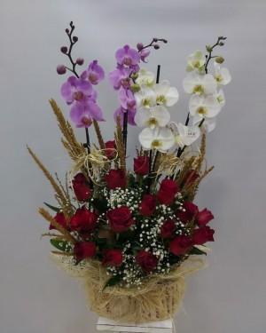 Orkide 4 Dal Kırmızı Güller