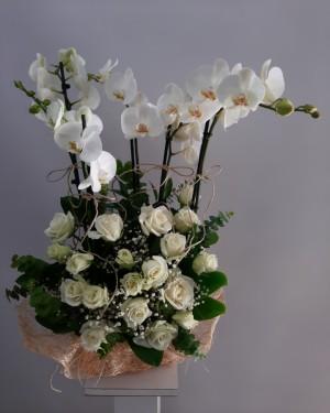 Orkide 5 Dal 20 Beyaz Gül