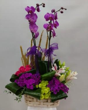 İzmir Çiçek Orkide Tasarım