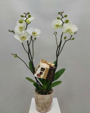 İzmir Orkide Truffle Çikolata