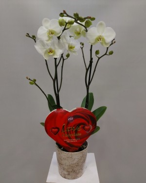 İzmir Orkide Kalp Çikolata