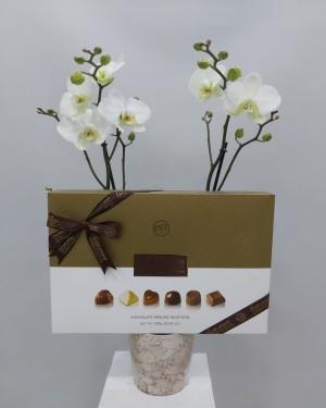 İzmir Orkide ve Çikolata
