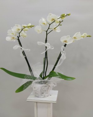 İzmir Çiçekçi 3 lü orkide