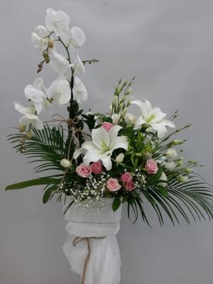 Orkide Çiçek Aranjmanı İzmir