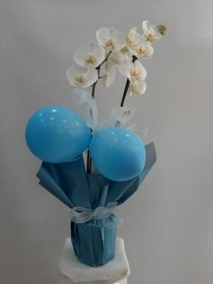 Yeni Doğan Erkek Bebek Orkide Mavi Balon