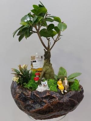 Bonsai Teraryum