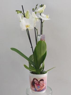Fotoğraflı Beyaz Orkide 3 Dal
