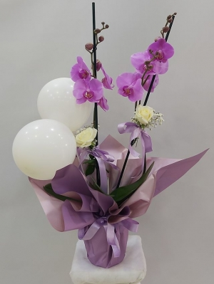 Yeni Kız Bebek Orkide Gül Balon