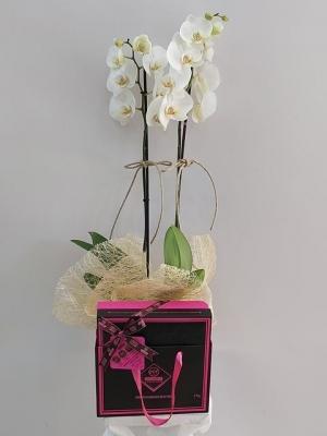 Orkide Çikolata