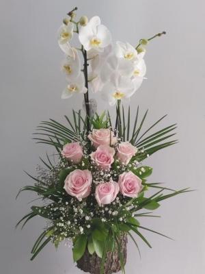 Kütükte Pembe Gül Orkide