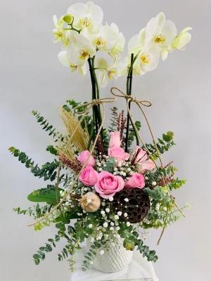 Pembe Gül Orkide
