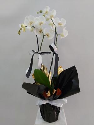 Siyah Beyaz Çiçek Orkide